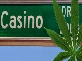 casino medical marijuana2