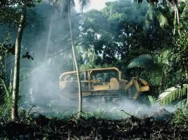 Bulldozing Trees